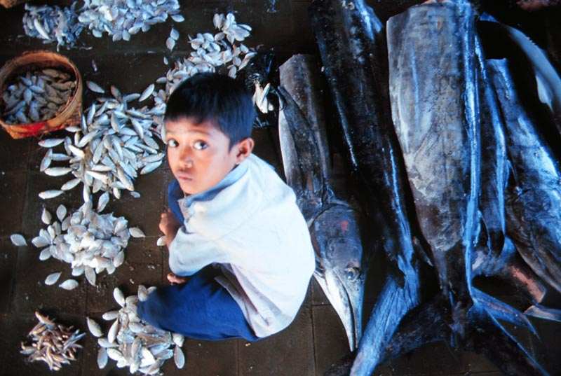 A young boy looks up from sorting fish in a local market.